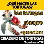 Experimento Todoapuestas, Criadero de tortugas